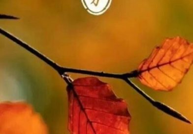 旅日華人诗作《又见秋分》