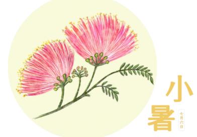 俳人笔下的节气与花 | 小暑  (人民中国 )